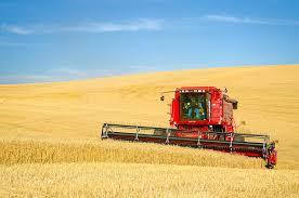 combine wheat