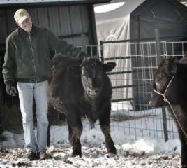 dad&calves