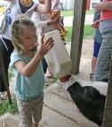 girl-feeding-calf