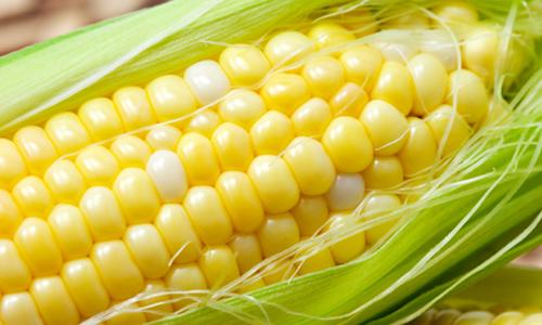 sweet corn - close