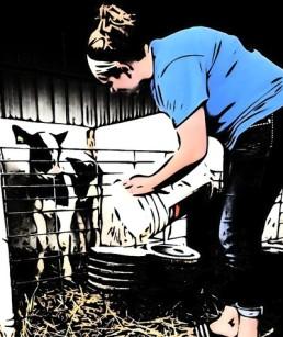 feeding calf at julies.jpg