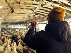 farmchat-with-nick-hermanson-in-turkey-barn