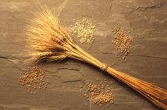 wheat2.jpg