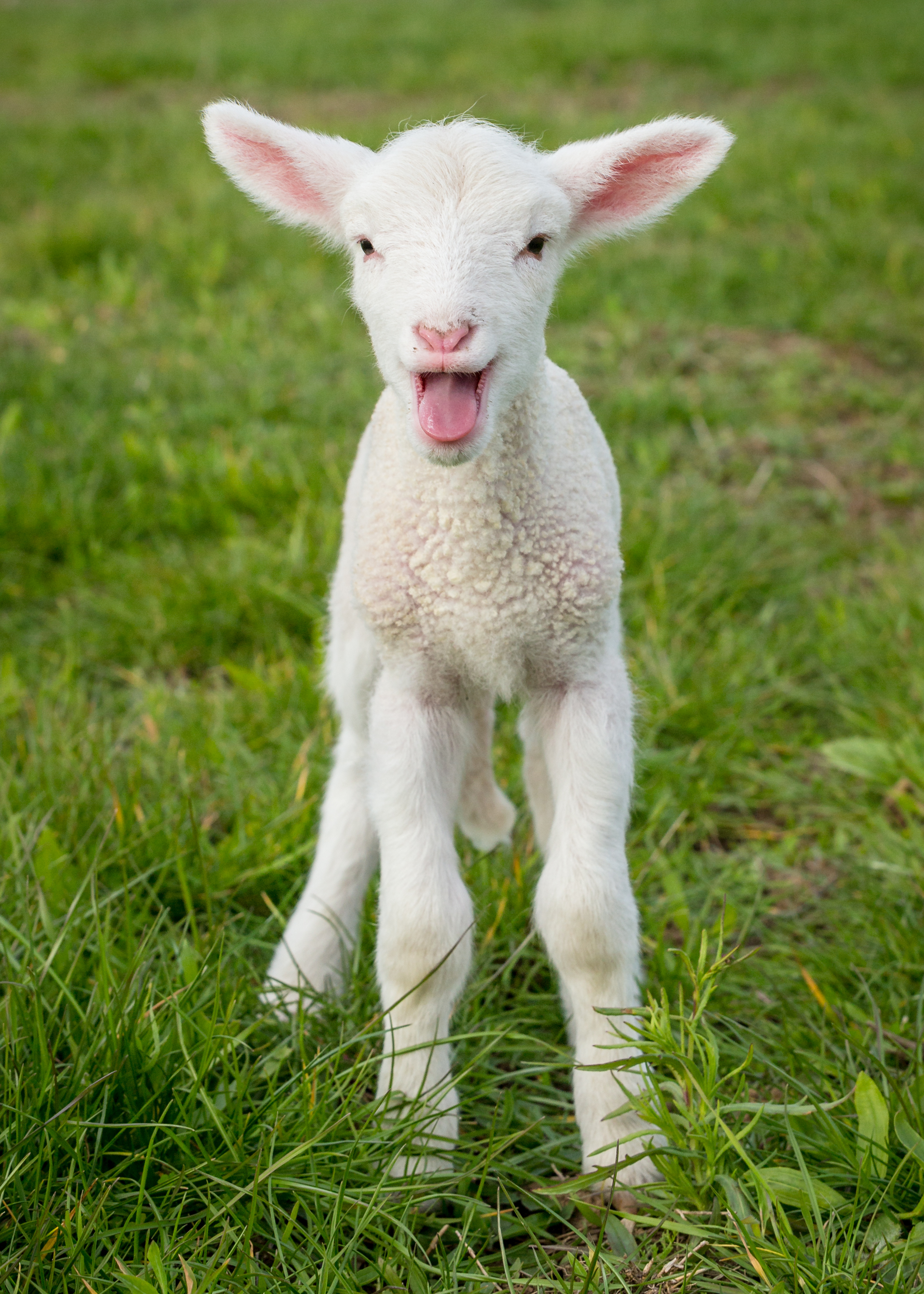 Why are Baby Farm Animals Typically Born in the Spring? | Iowa Agriculture Literacy - photo#42