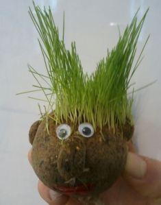 Grassheadbig