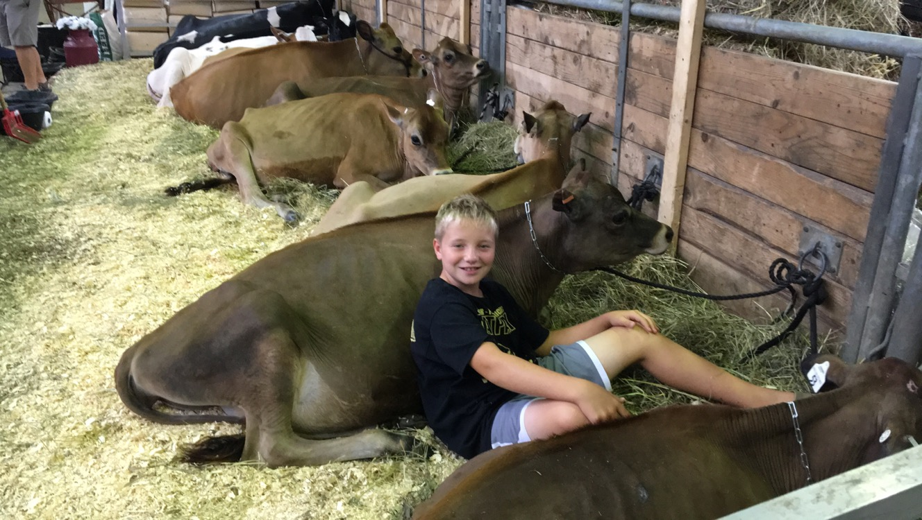 Harry laying with cows