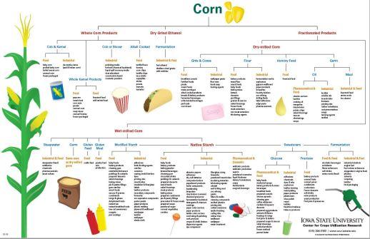 corn post jpg