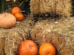 759-pumpkins-on-straw-bales-pv