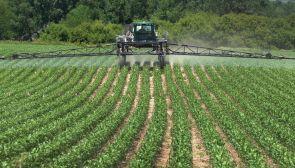 spraying corn