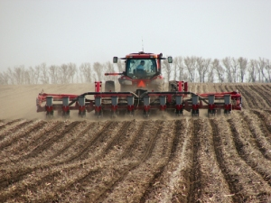 Strip-Tillers_Putting_Manure_1