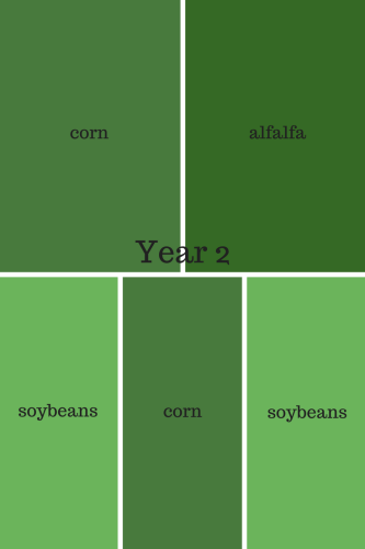 Year 2 crop rotation
