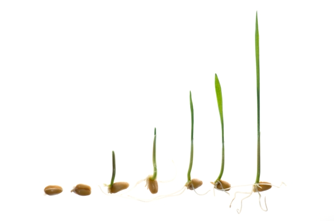 germination stages