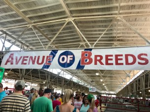 Avenue of the Breeds