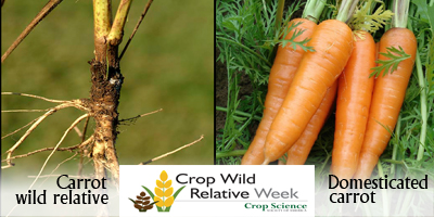 cwr-week-carrot-400.jpg