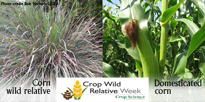 cwr-week-corn-400.jpg