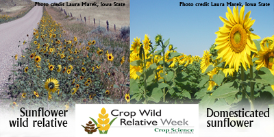 cwr-week-sunflower-400.jpg