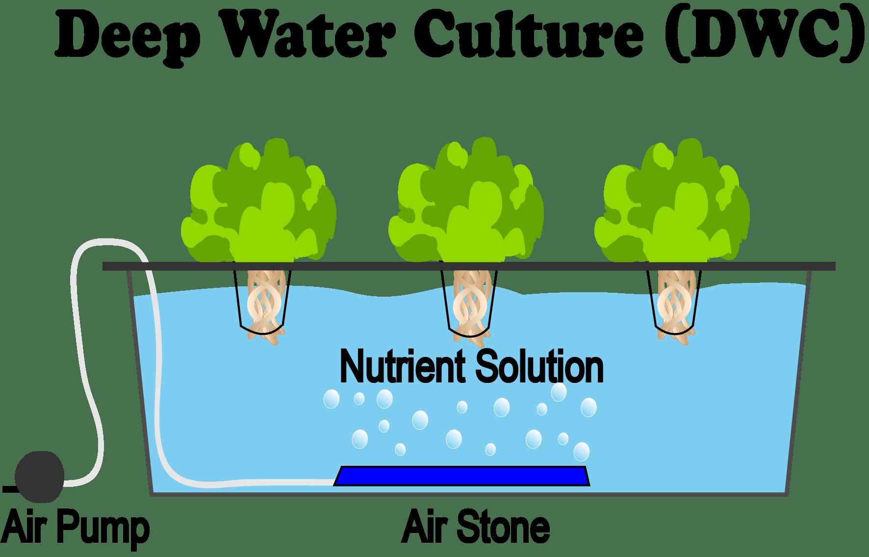 Deep-Water-Culture