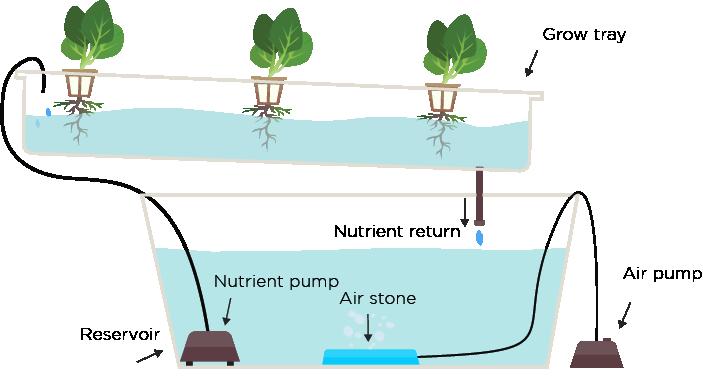 NFT-Nutrient-Film-Technique