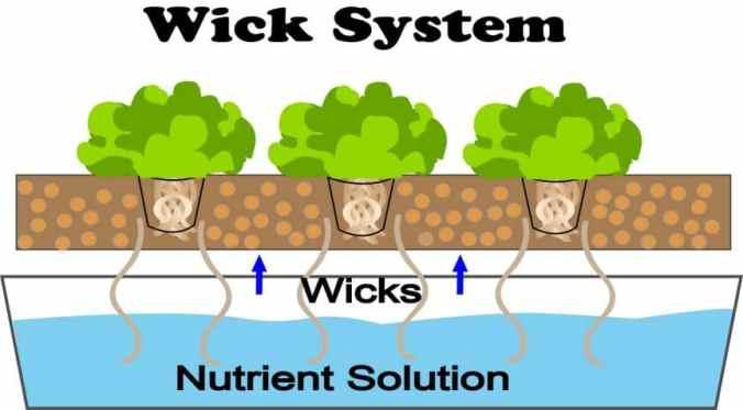 Wick-System-hydroponics-diagram-1-864x478
