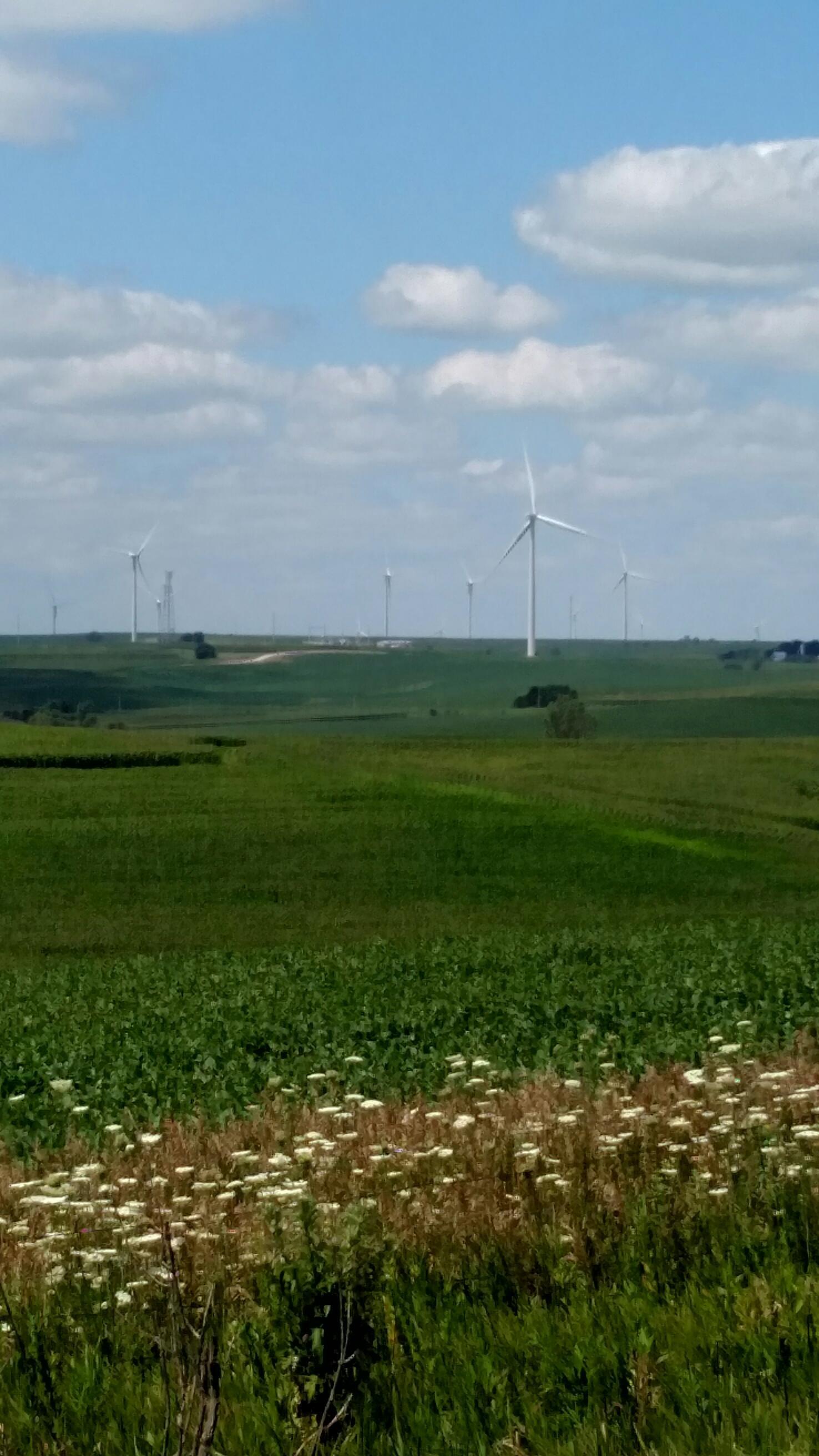 wind farm in distance