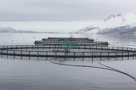 large fish cages